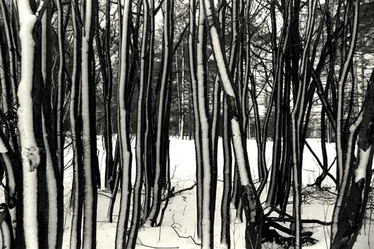 Trees with snow II