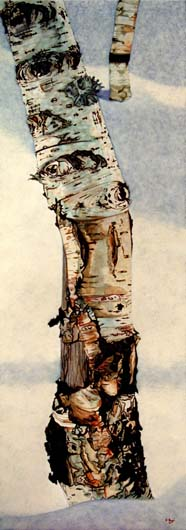 Birch with Lichen